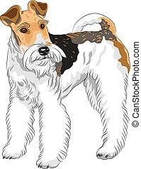 terrier, rashond dog, vector, staand, schets, vos, draad