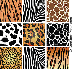 texturen, huid, dier