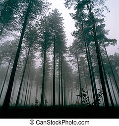 thetford, bos, bomen