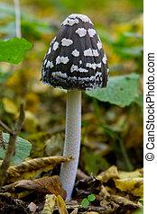 toadstool, paddenstoel