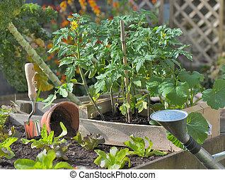 tomaat, planten, tuin, aanplant, sla, groente