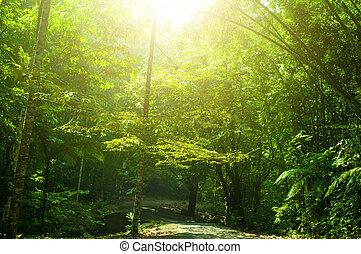 tropische , groen park, aanzicht