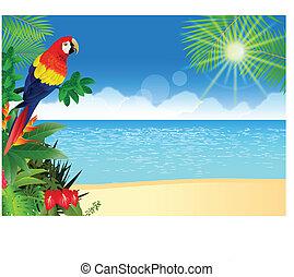 tropische , macaw, strand, backgroun