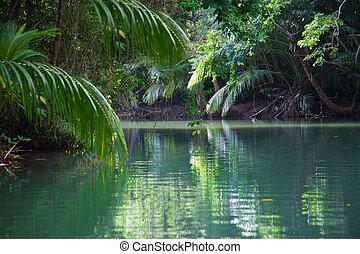 tropische , tranquil, sterke drank, meer, vegetatie