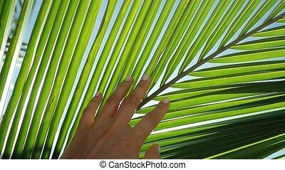 tropische , vertragen, blad, zon, motion., hand, lens, helder, aandoenlijk, palm, effecte, vrouwlijk, vuurpijl, sun., meisje, het genieten van