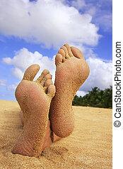 tropische , voetjes, strand, zanderig