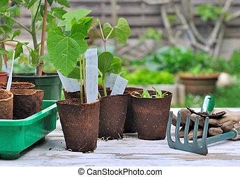 tuin, seedlings