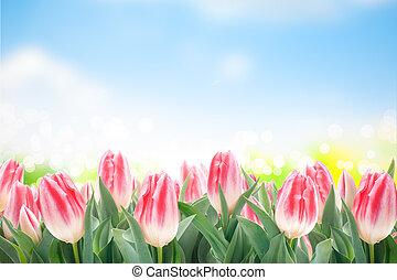 tulpen, bloemen, gras, groene, lente