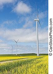 turbines, wind, canola