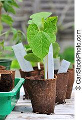 turf, seedlings, kop