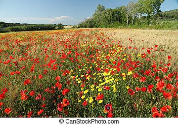 tuscan, platteland, beauty