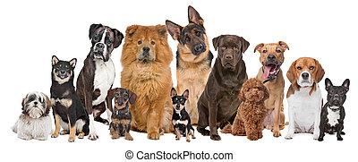 twaalf, groep, honden