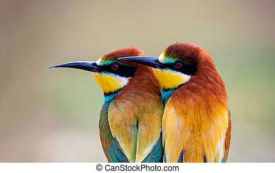 twee, liefde, bee-eaters, mooi