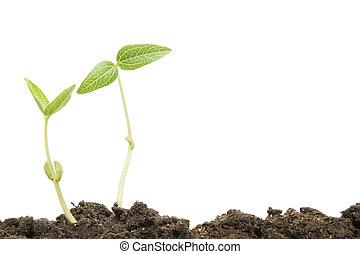 twee, seedlings