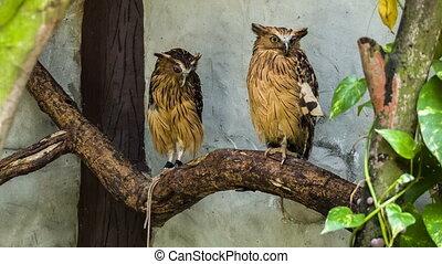 uilen, twee, tak
