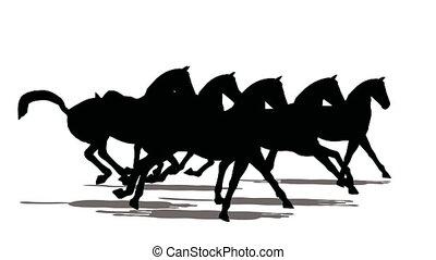 uitvoeren, kudde, zwarte achtergrond, kleine, paarden, witte , silhouette