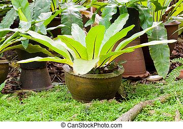 varen, plant, tuin, tropische