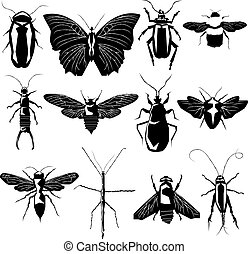 variëteit, vector, silhouette, insect
