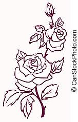 vector, achtergrond, drie, vrijstaand, rozen, stylized, licht, bleek, illustratie