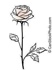 vector, achtergrond, roos, roze, mooi, vrijstaand, enkel, witte bloem, illustratie