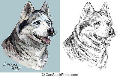 vector, husky, monochroom, verticaal, tekening, hand, kleurrijke, siberisch