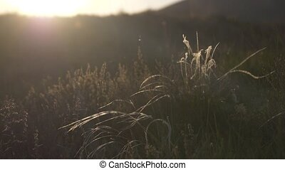 veer, bloem, gras, steppe, wind