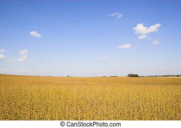 velden, farmlands