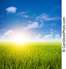 velden, groen landschap, paddy