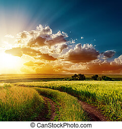 velden, op, dramatisch, ondergaande zon , straat