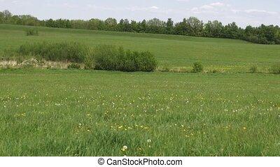 velden, prairie, weiden, weiden