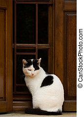 venster, kat