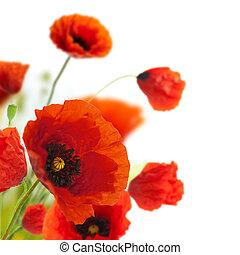 versiering, -, bloemen, klaprozen, floral, hoek, grens, ontwerp
