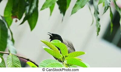 verticaal, boompje, vogel