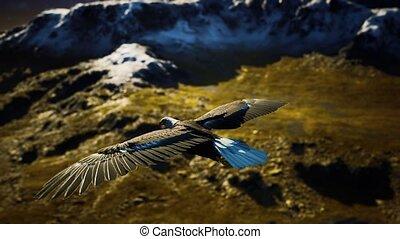 vertragen, adelaar, vlucht, op, motie, kaal, amerikaan, bergen, alaskan
