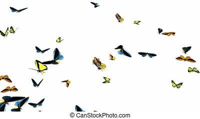 vertragen, looping, 1, zwerm, vlinder, animatie