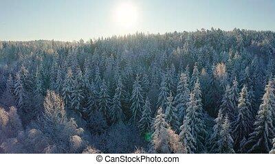 vertragen, winter, besneeuwd, vliegen, op, morgen, bos, boven, koude, episch