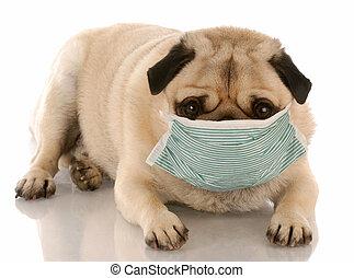 vervelend, besmettelijk, medisch, pug, masker, ziek, of