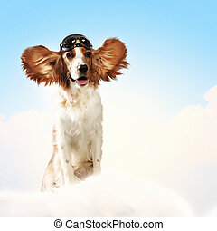 vervelend, helm, collage, dog-aviator, pilot.