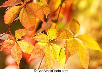 (very, dof, bladeren, ondiep, leaf), brandpunt, vaag, herfst, achtergrond, abstract, eerst
