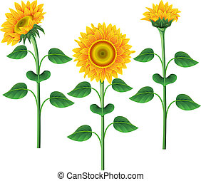 verzameling, sunflowers.
