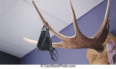 video, hangend, horns, black , eland, slipjes