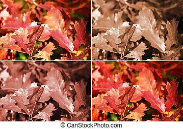 vier, autumn leaves, eik, varianten