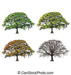 vier, eik, abstract, boompje, jaargetijden