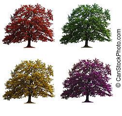 vier, eik, vrijstaand, bomen