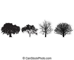 vier, witte , black , bomen