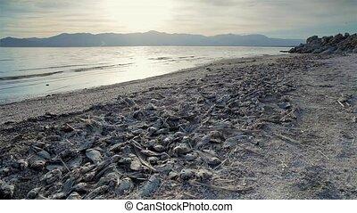 visje, strand, dood