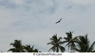 vlieg, adelaar, hemel, bewolkt