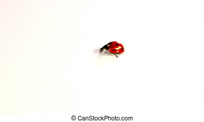 vlieg, ladybugs, weg, rood
