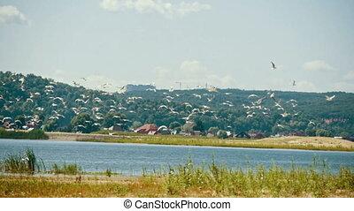 vlieg, zomer, op, seagulls, dag, slow-motion, vlucht, rivier