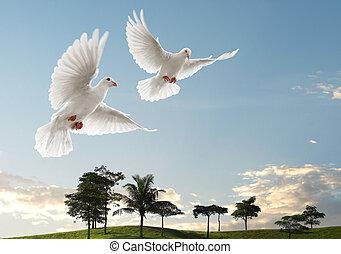 vliegen, twee, duiven